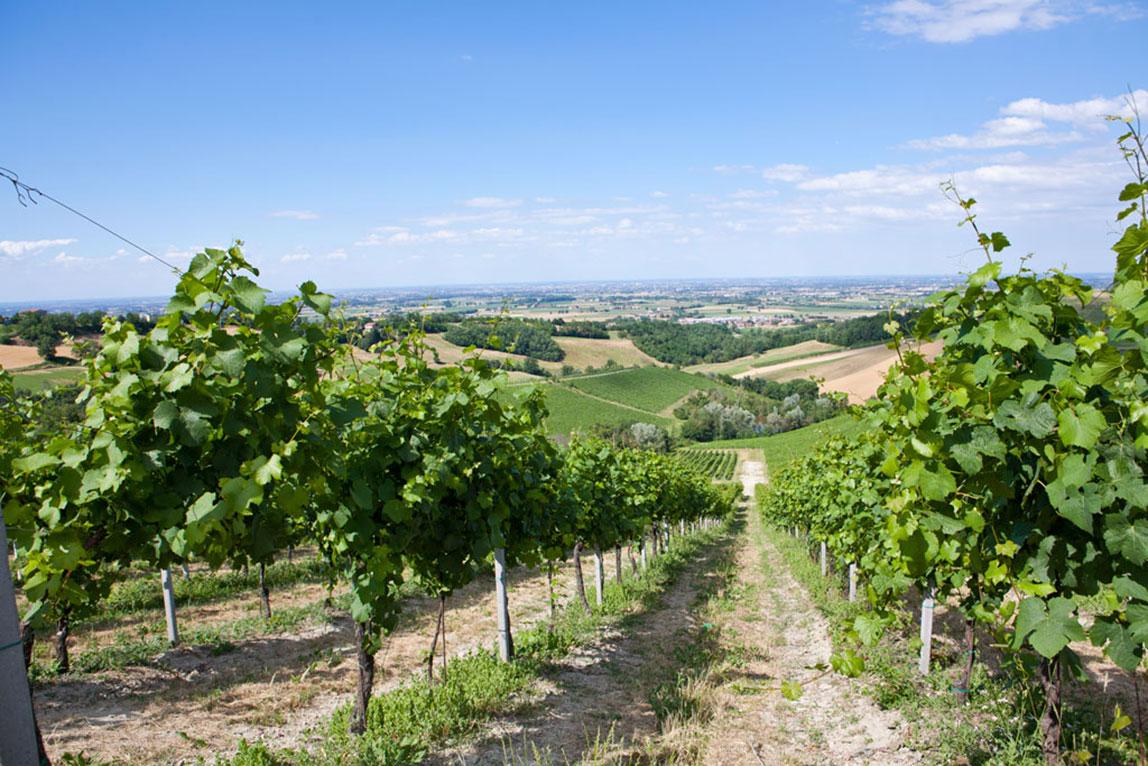 Agriturismo al Vigneto Parma