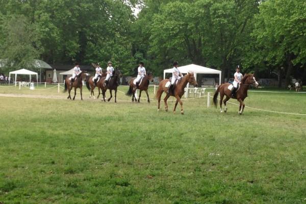 Equitazione Parma Maneggio Corsi Passeggiate Cavalli Mini-pony