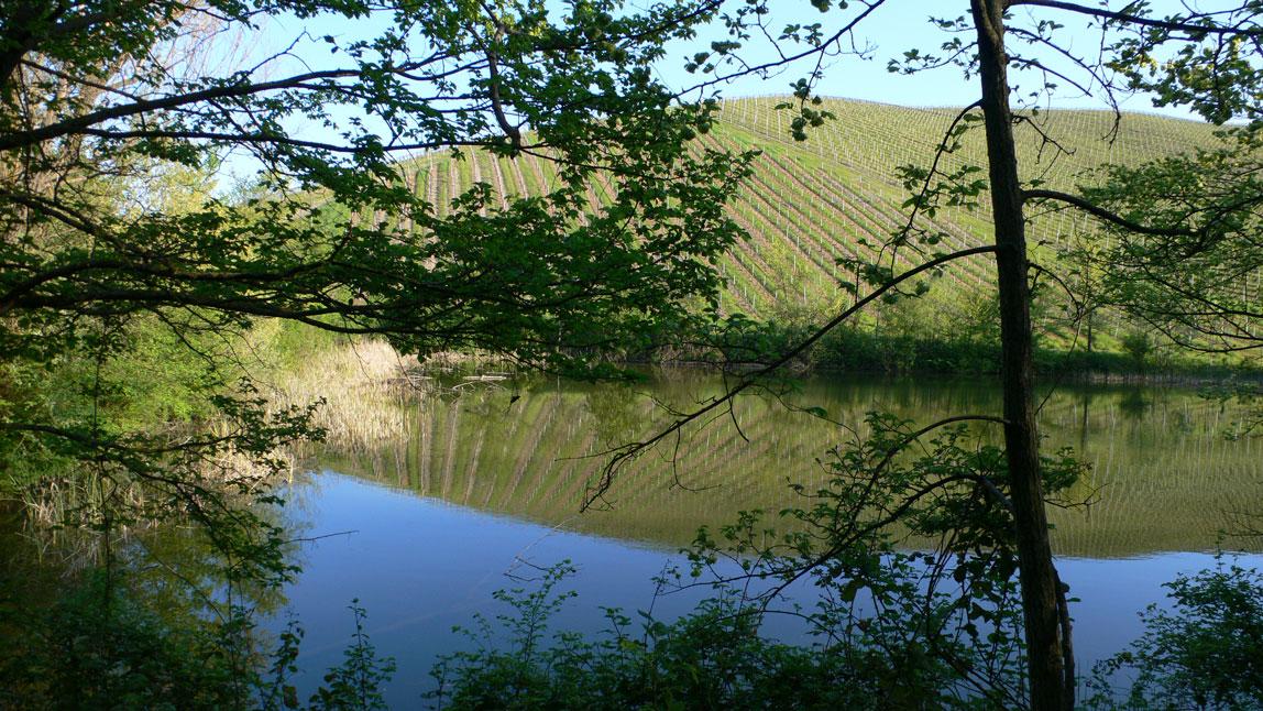 Agriturismo Al Vigneto Parma lago